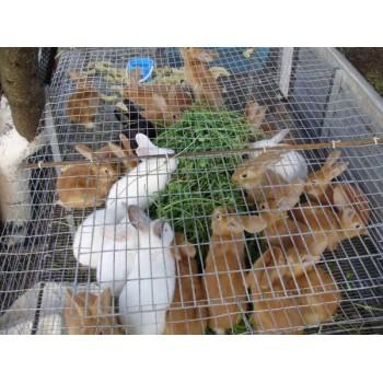 Сітки для кліток кроликів